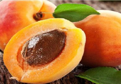 Yves Rocher Apricot Scrub